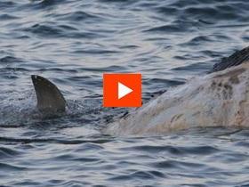 Wattamolla Whale Wake