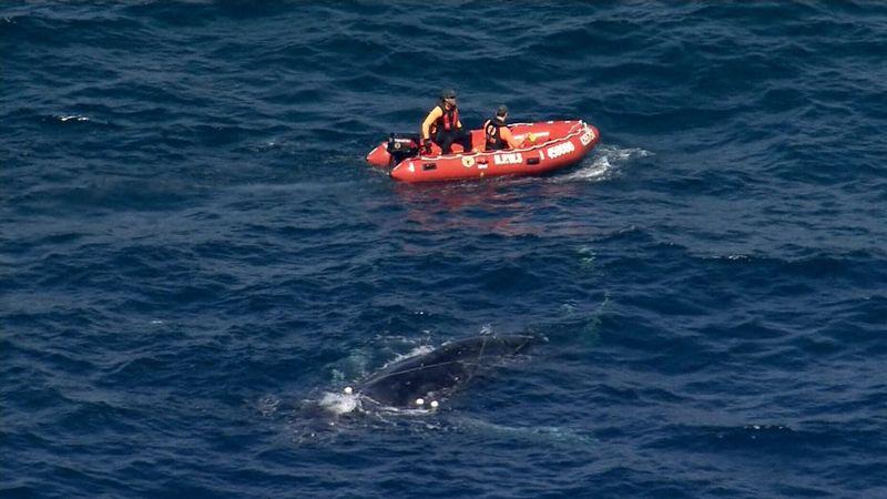 Wattamolla Whale Rescue